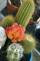 Colorful assorted cactus