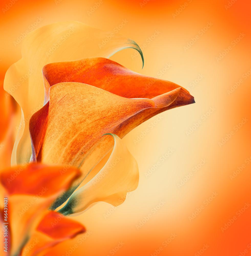 tło kwiat natura - powiększenie