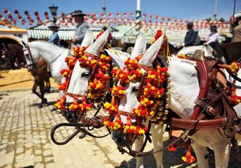 Caballos blancos en la Feria de Sevilla, Andalucía, España