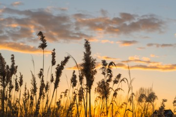 Beautiful warm sunset at Summer