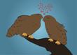влюбленные совы