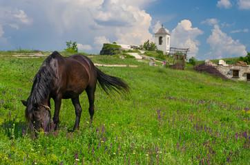 Horse grazes near church in Old Orhei, Moldova