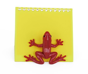 frog on paper