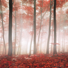 Red fantasy forest © robsonphoto