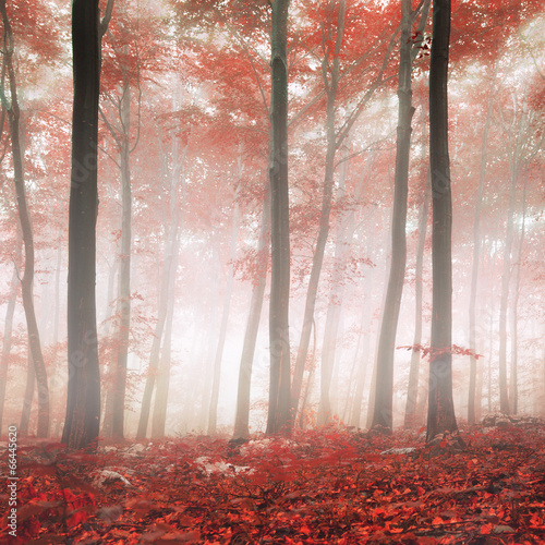 Red fantasy forest