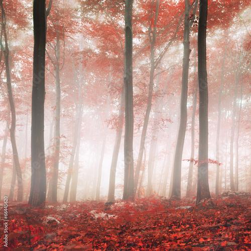 czerwony-las-fantazji-marzycielski-mistyczny-wyglad