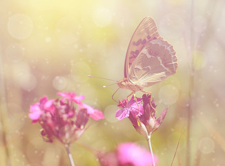 Dreamy photo of a butterfly on flower