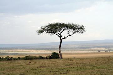 Arbre solitaire dans la savane
