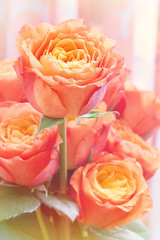 Closeup of a beautiful  orange roses . Floral background.