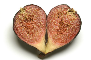 Ficus carica Common fig 무화과나무 Инжир تين معروف