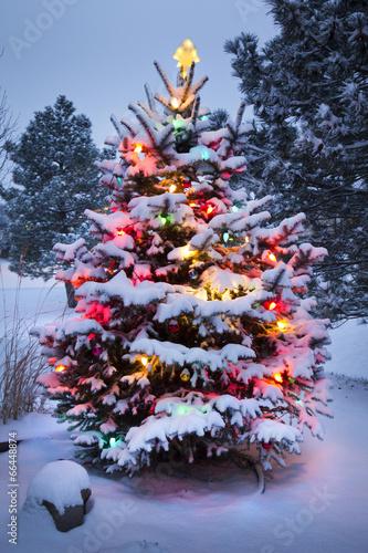 Keuken foto achterwand Bossen Brightly Lit Snow Covered Christmas Tree