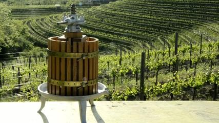 Vindima Vendemmia Harvest (wine) Vendimia Traubenlese