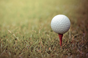Golf club and ball on grass.