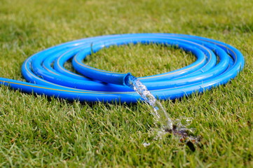 Garden Blue hose  on green grass.