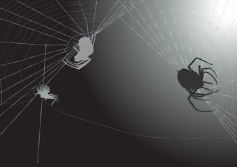 three spiders in web on dark grey background