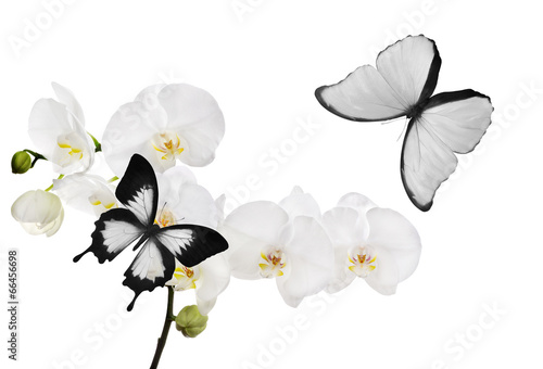 Deurstickers Vlinder large white orchid flowers and two butterflies