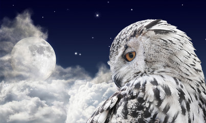 white owl and full moon in clouds