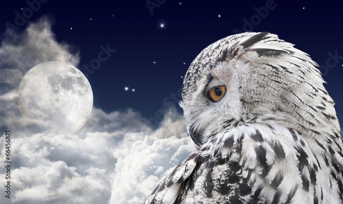 Keuken foto achterwand Uil white owl and full moon in clouds