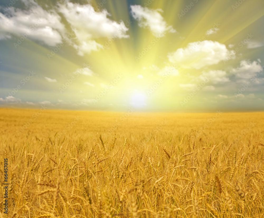 plon natura rolnictwo - powiększenie
