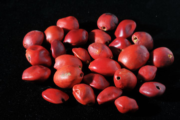 Colored Round Seeds Ready to make Handmade Jewelry