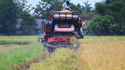 Harvesters Rice