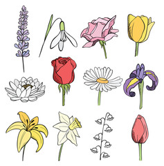 many different flowers color vector collection