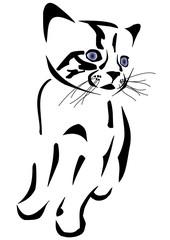 Süße Babykatze mit wunderschönen blauen Augen
