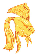 beautiful golden fish vector