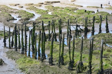Wooden posts in creek