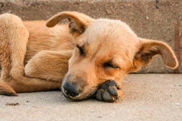 Young stray dog sleeping