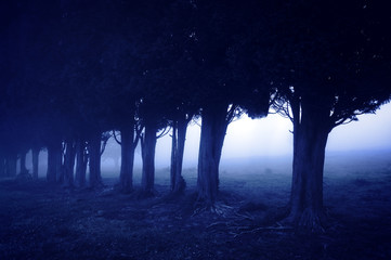 horror forest at night