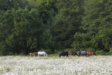 Horses graze on the edge