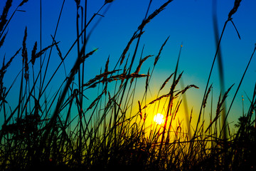 sunset on a background of grass