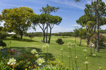 Sunny landscape of golf course