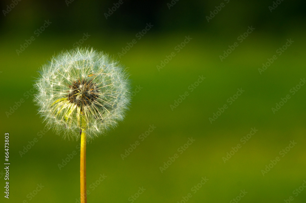 wzrost nasienie pyłek - powiększenie