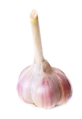 Garlic on white background.
