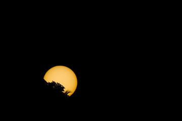 Eclipse de soleil par les feuilles
