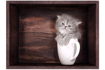 kitten in a wooden box