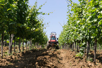 Tractor spraying vineyard