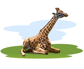 tired giraffe