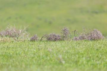 tumbleweed grass field
