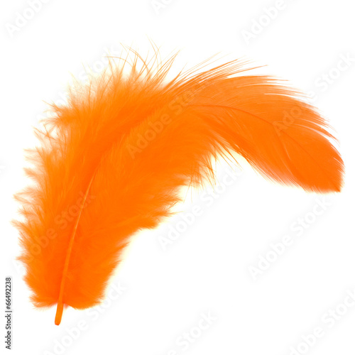 Foto op Canvas Kip Orange feather isolated on white background cutout