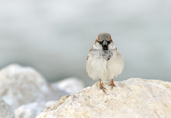 Closeup of a beautiful sparrow
