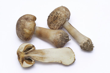 Mushrooms, white background