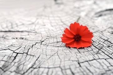 цветок на древесине