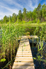 Wooden bridge in reed plants