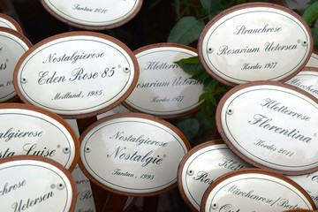 Name of roses