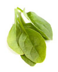 Young leaves of spinach isolated
