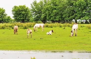 Rainy Day Horses