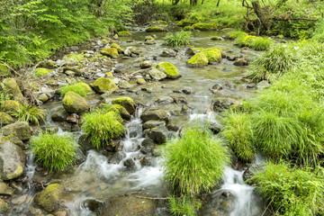 山吹水源の沢の流れ